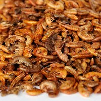 dried insects / shrimp